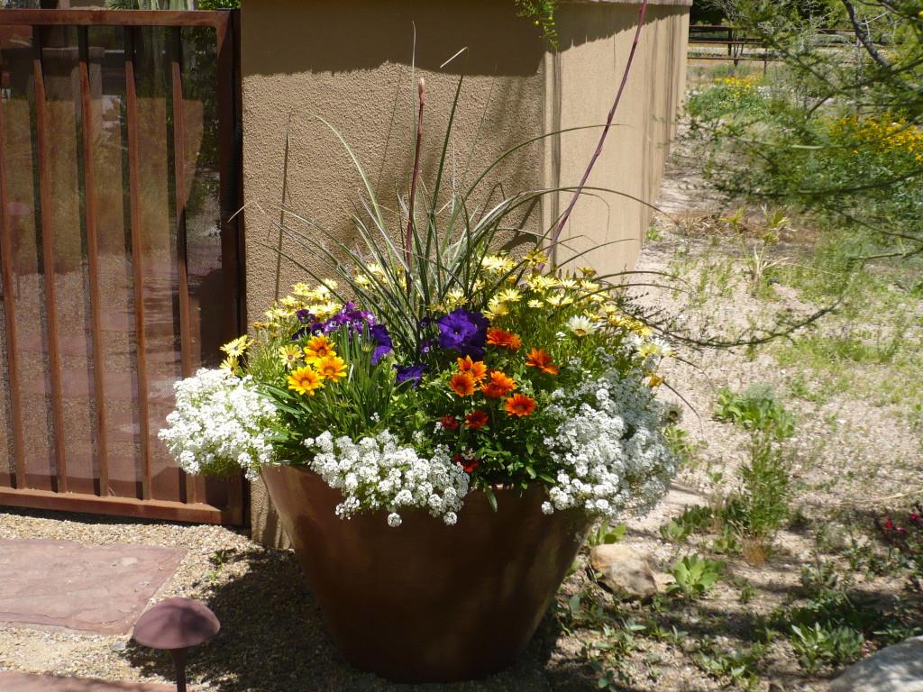 Desert Potted Garden in the Winter