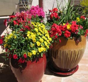 Desert Container Garden Choosing the right pots