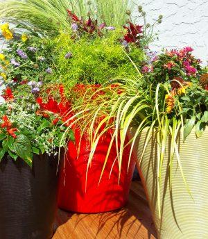 Contemporary Lite-wt pots with shoulder season plantings