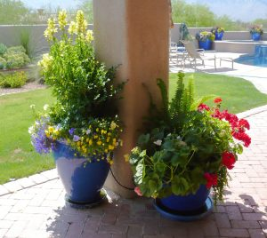3 Pots are manageable. Check the sun's path The Potted Desert