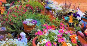 Massive Array of flowers in a desert garden by Barbara W