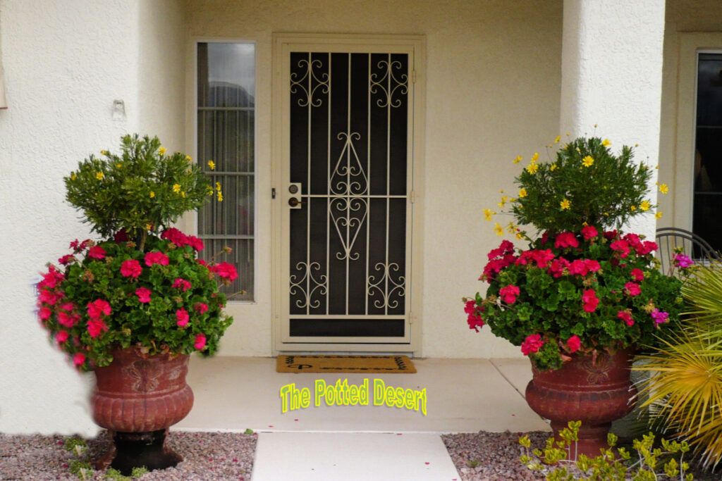 Entry to a Desert Home with Potted Geraniums and Yellow Daisy Tree by the Potted Desert