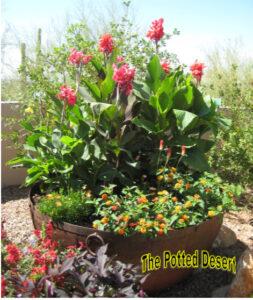 Red Canna in a Jumbo Desert Summer Garden Pot