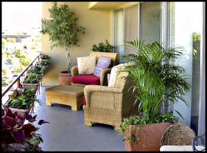 Create a garden room on your balcony or patio with the Potted Desert