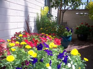 Winter Container Garden design with The Potted Desert